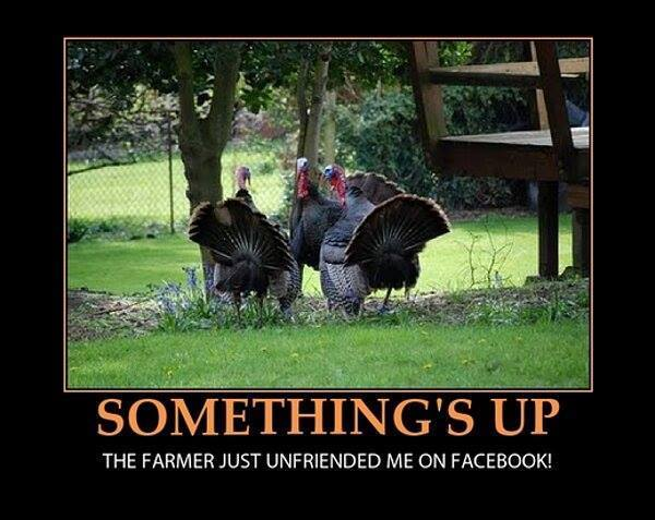 Turkeys don't like Thanksgiving