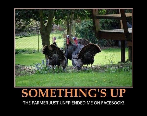 Turkeys don't like Thanksgiving